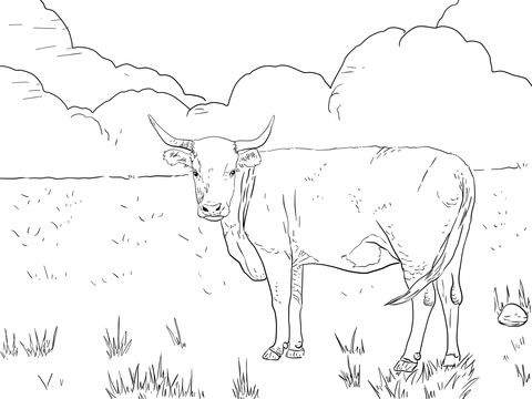 Horned Hereford Cow Coloring Page Cow Coloring Pages Hereford