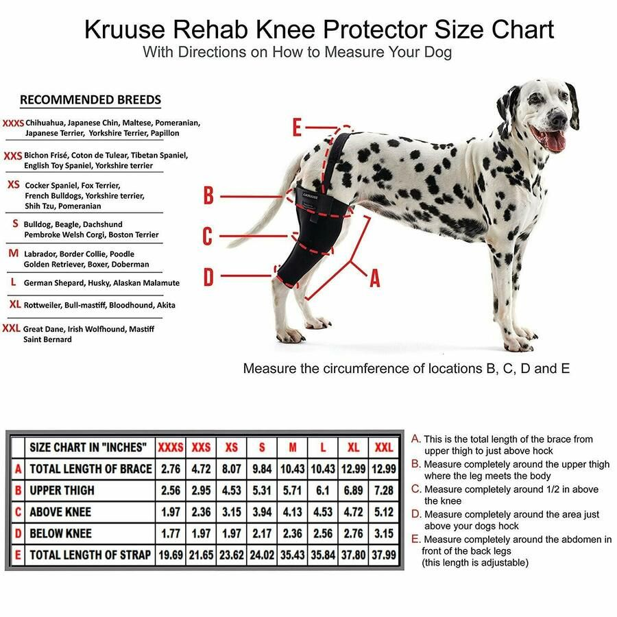 Kruuse Right Rehab Knee Protector X Small Premium Service Fast Dispatch Dog Braces Dogs Dog Leg