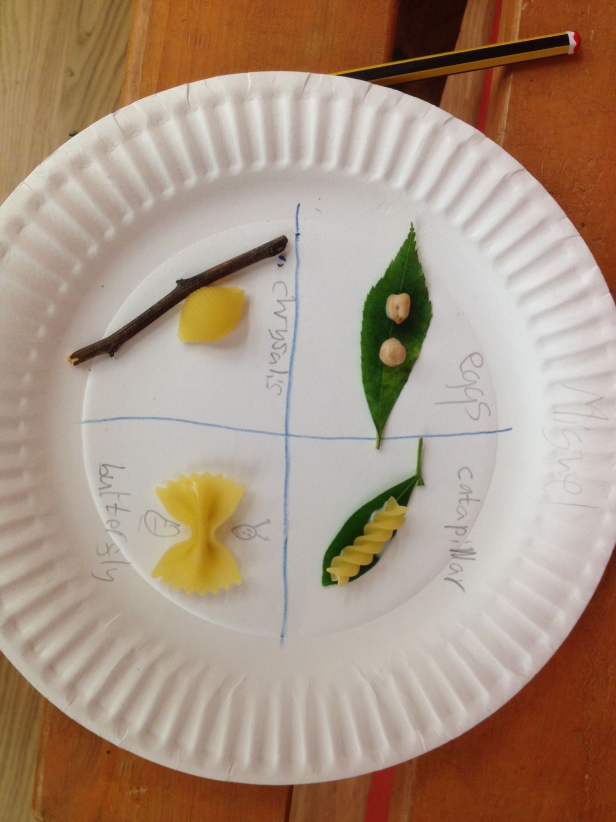 Life Cycle Of A Butterfly Using Different Pasta To