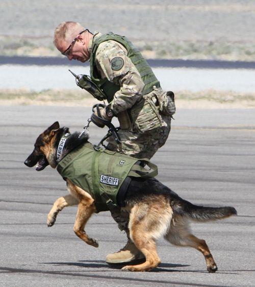 K9 Military Dog K9 Portrait Angry Stock Photo 626715428 - Shutterstock