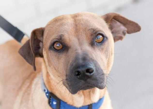 Adopt Lily On Labrador Retriever Mix Dogs Retriever Mix