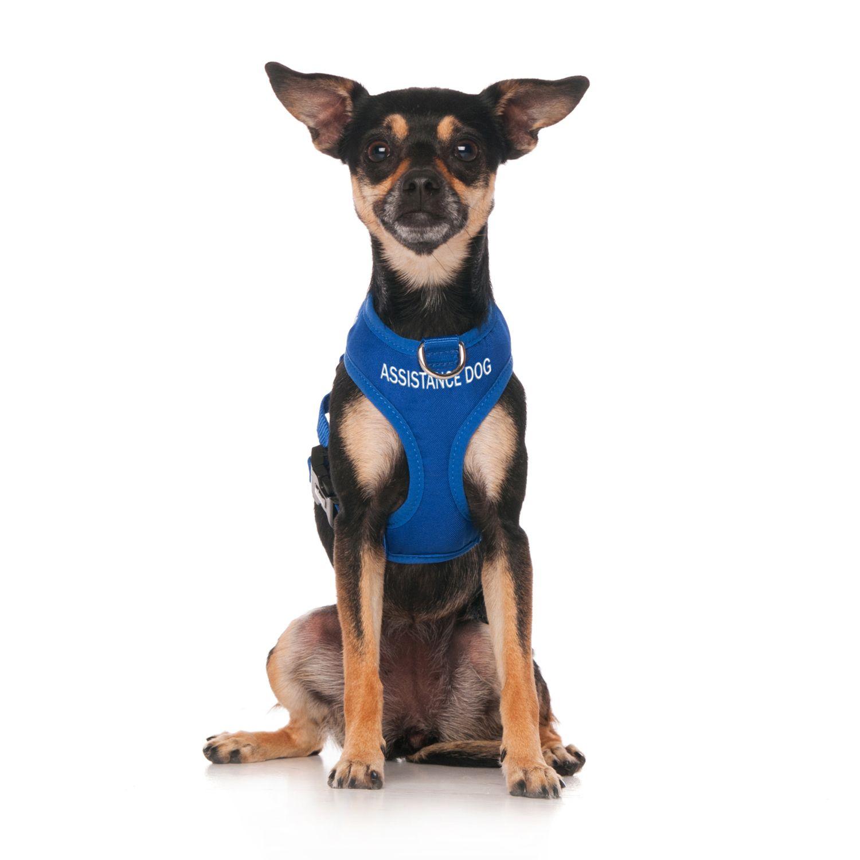 Assistance Dog Xs Adjustable Vest Harness Dogs Pets Service Dogs