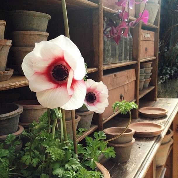 Linen Pots And Anemones...some Of Our Favorite Signs Of