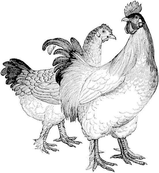 Album De Imagenes Para La Inspiracion Farm Prints Rooster Art