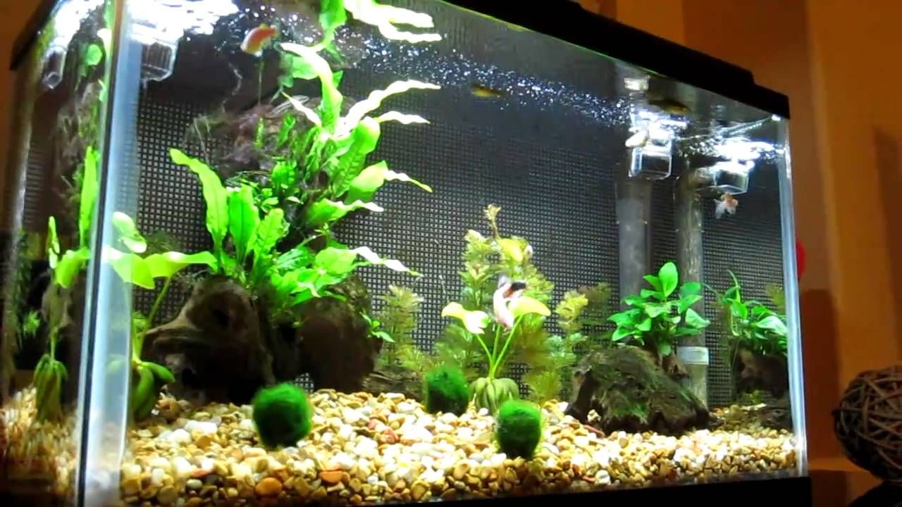 10 Gallon Freshwater Aquarium With Live Plants Pond Plants Aquarium Pictures Planted Aquarium