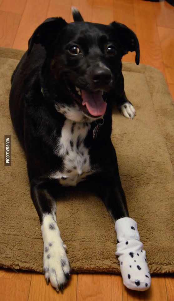 Our Girl Kept Eating Her Purple Bandage From The Vet Introducing The Camo Bandage Very Cute Dogs Cute Animal Pictures Cute Animals