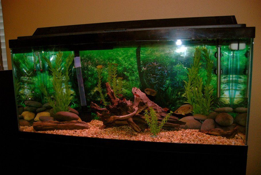 Hey this is my 30 gallon freshwater tropical fish tank Thirty gallon fish tank