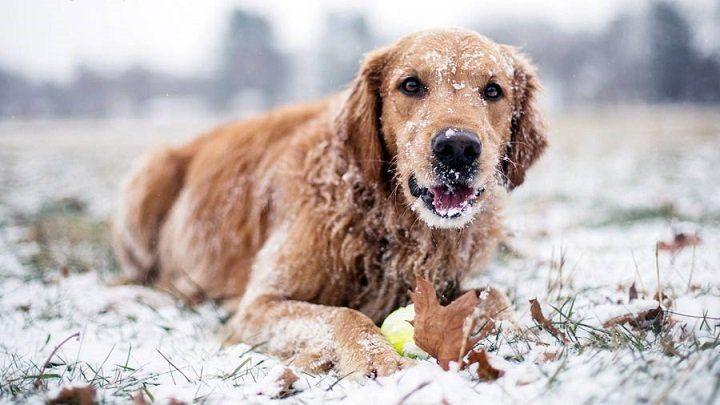 ABRIGANDO A LOS PELUDOS: Los perros pasan frío?