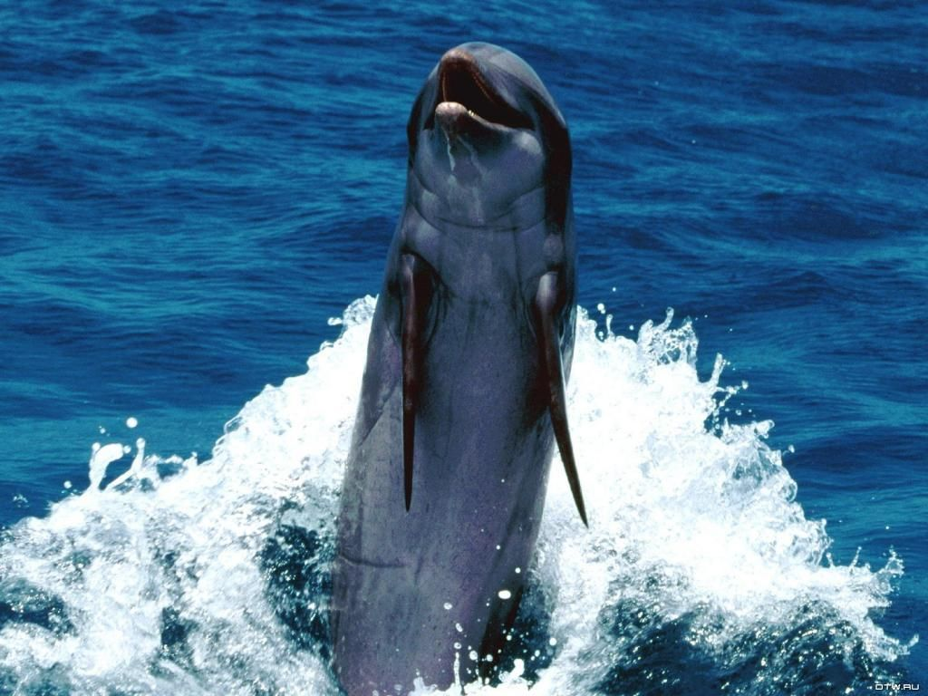 fondos de delfines en movimiento: http://wallpapic.es/animales ...