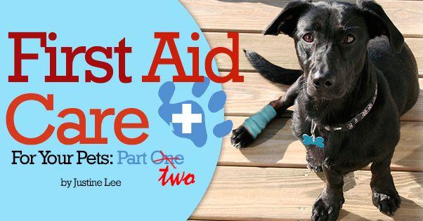 Pet First Aid 102 Pet Insurance Reviews Pet Health Puppy Care