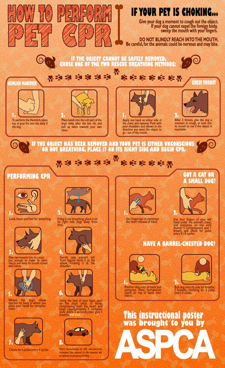 Pet Cpr Instructional Poster I Think I Pinned A Similar One But