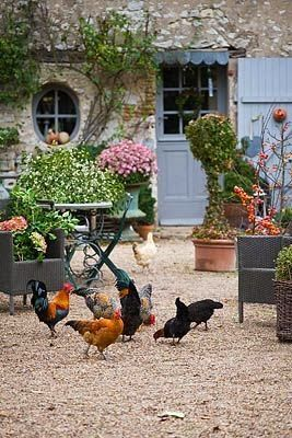 I love the free range chickens wandering in the garden courtyard of this French country house with potted flowers and vines growing up the wall....Some Flowery Inspirations for Spring