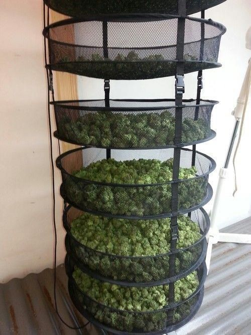 Cannabis Drying Rack New Drying Rack That Breaths For Cannabis Pipes Pinterest Cannabis
