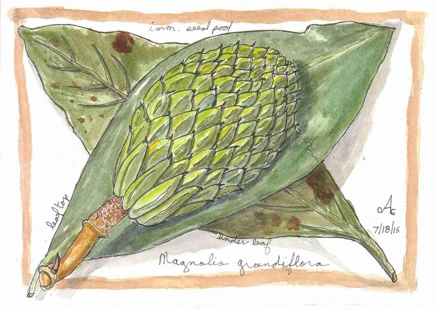 Gw3m0vhcquqjgerq3dno magnolia2.q20:ctrue:rexif