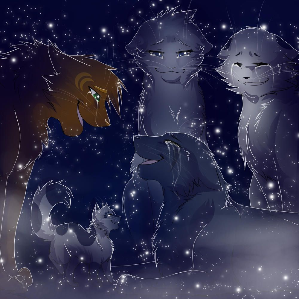 Welcome Bluestar by RiverSpirit456 // Oddly enough, WCF is the only place you can find this beautiful picture.