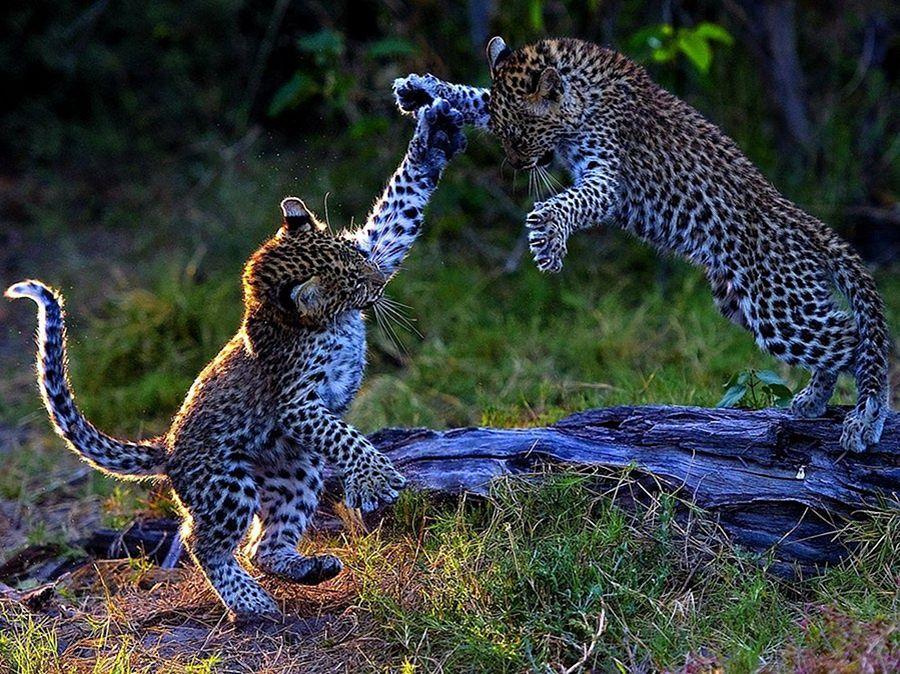 самые красивые животные фото и картинки был