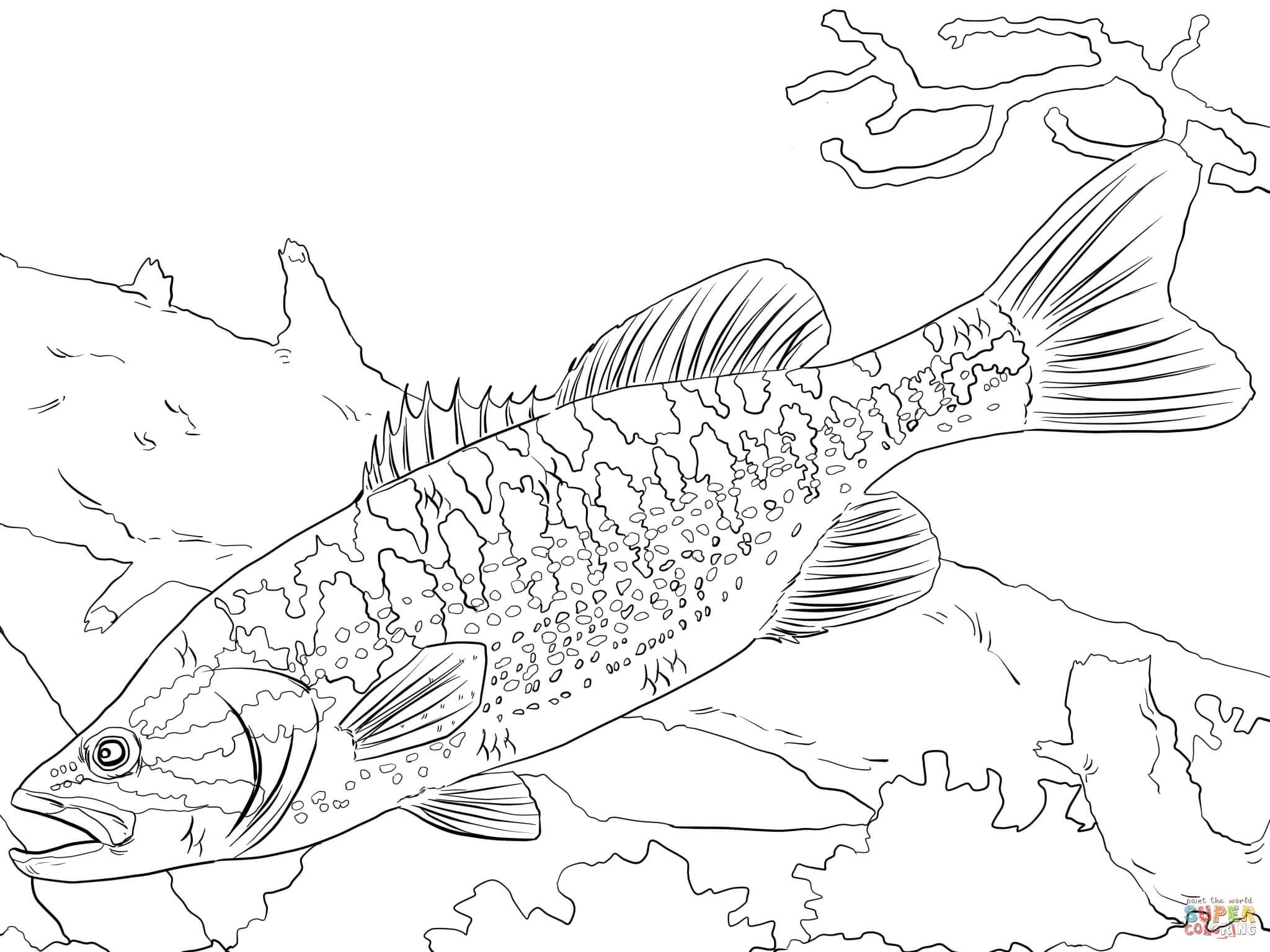 Coloring Download Freshwater Fish Coloring Pages Bass Fish