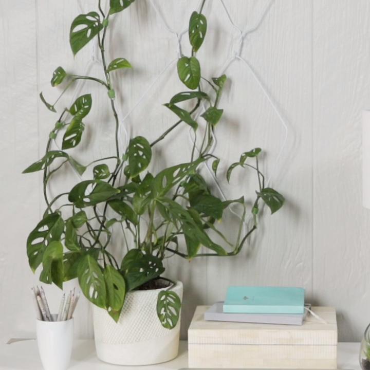 Give a trailing houseplant somewhere to grow with this easy-to-make wall hanger. Smart wire clipping and bending is all it takes. #indoortrellis #indoorclimbingplant #diytrellis #bhg