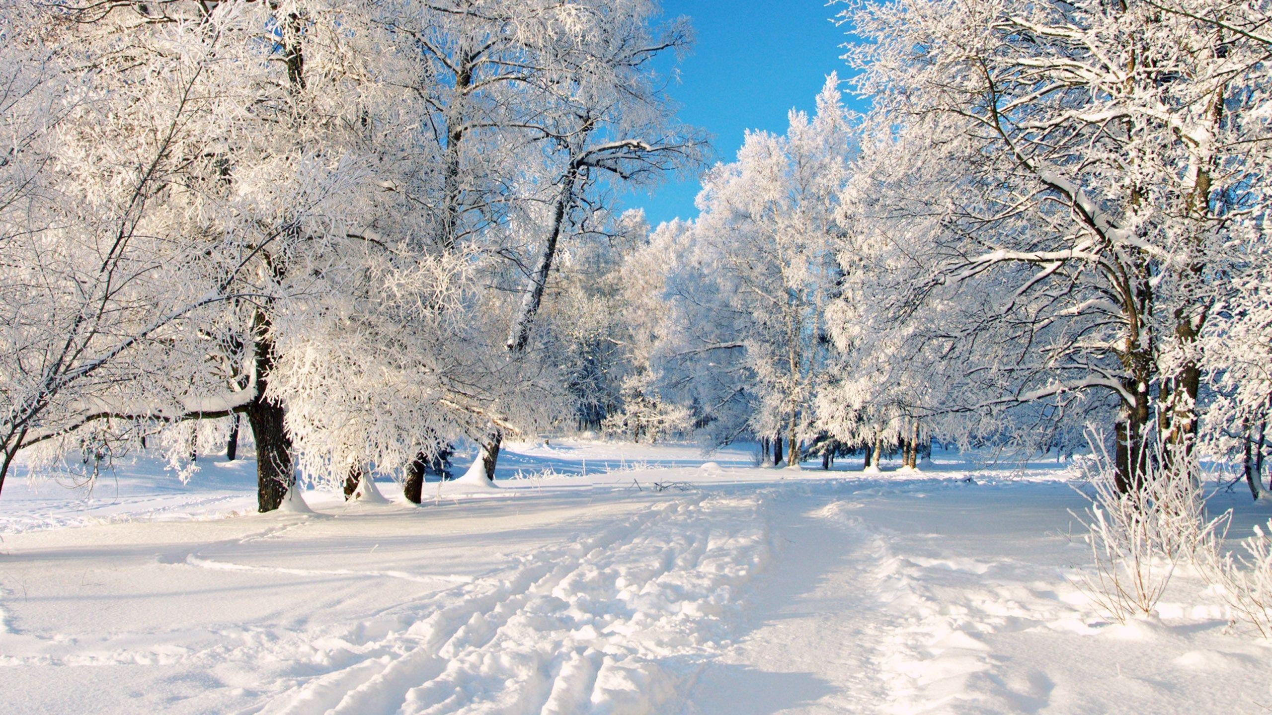 2560x1440 A Dreamy Winter Scenery Desktop Wallpapers And Stock Photos Winter Desktop Background Winter Scenery Winter Wallpaper Desktop