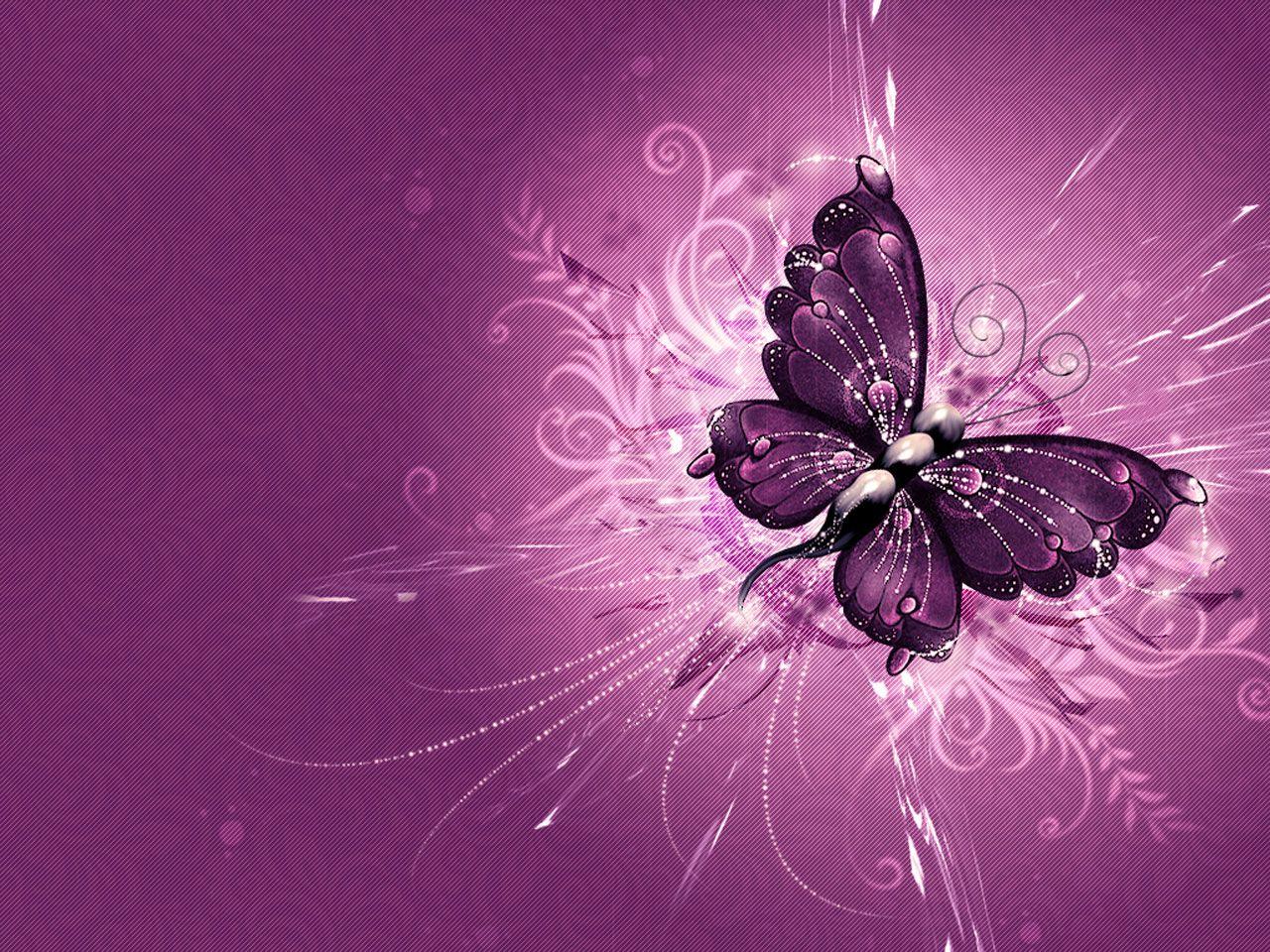 Butterfly Wallpaper Lila Schmetterling Schmetterlingsbilder Lila Tapeten