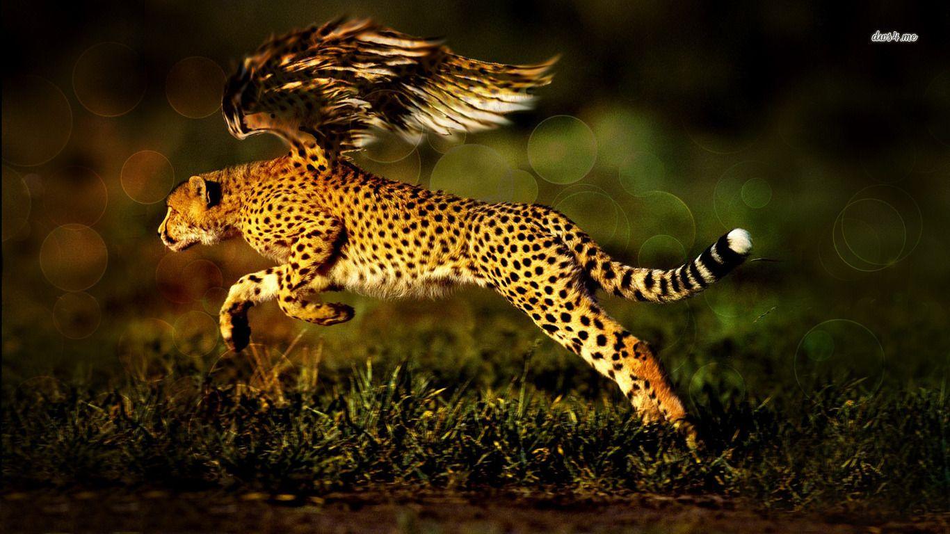 Cheetah With Wings Hd Wallpaper Cheetah Wallpaper Black Jaguar