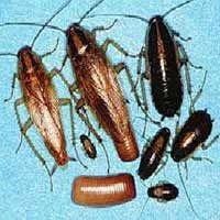 RI Cockroach Elimination