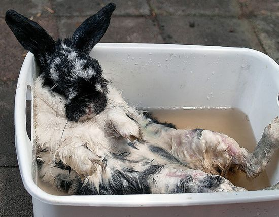 The 15 Most Adorable Pictures Of Rabbit Bathtime Super Cute