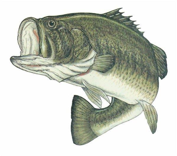 Bass fishing florida 39 s waters since 1979 fishing for Bass fishing art