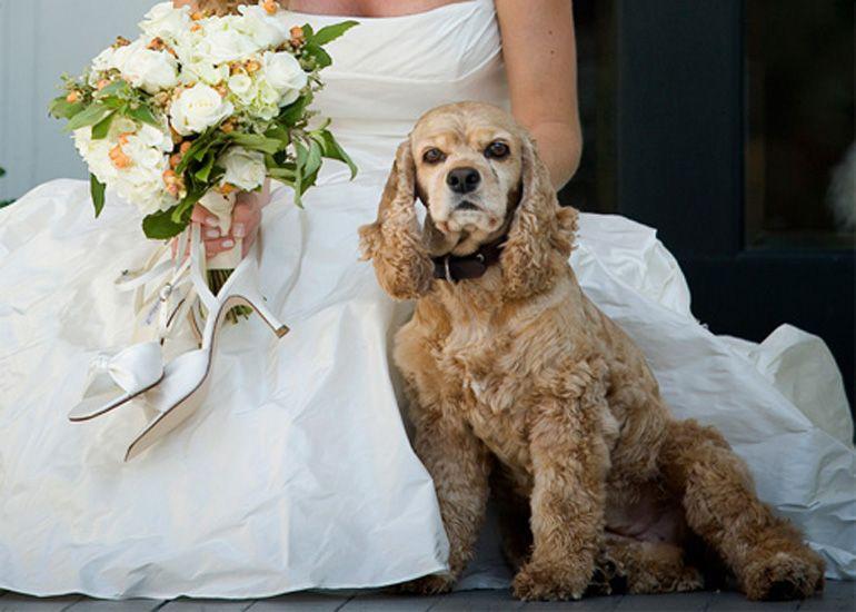 Cote Designs Bouquet Cockerspaniel Wedding Bouquet Cocker Spaniel Spaniel Art American Cocker Spaniel