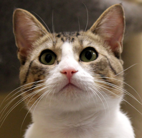 Skeeter! Cats, Animals, Animal rescue