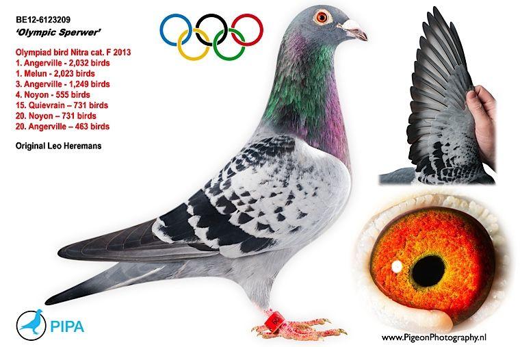 Bildergebnis für Olympic  Sperwer heremans