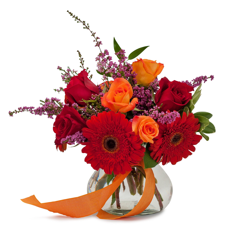 Sassy Breeze Tmf14 205 Beautiful Flowers Pinterest Flower