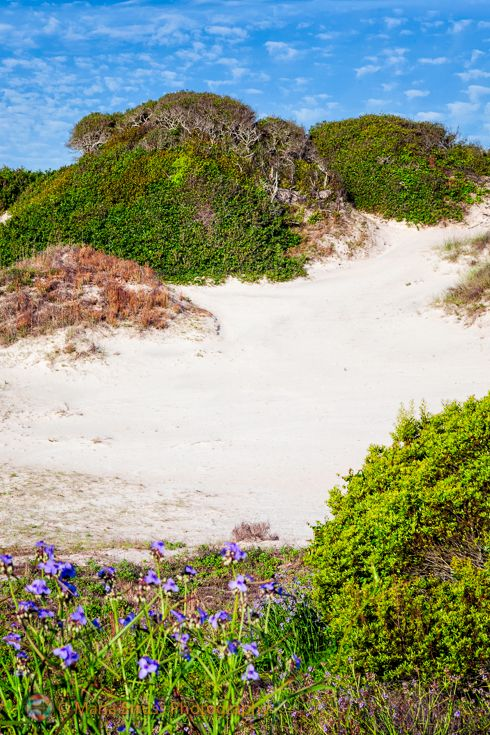 Nana's Dune, located on Amelia Island's American Beach is the tallest sand dune in Florida.