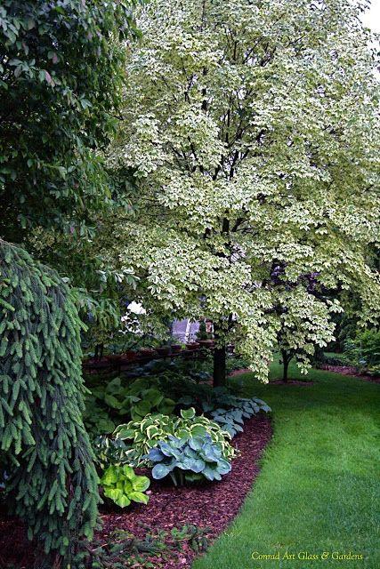 Conrad Art Glass & Gardens A few good deciduous tree