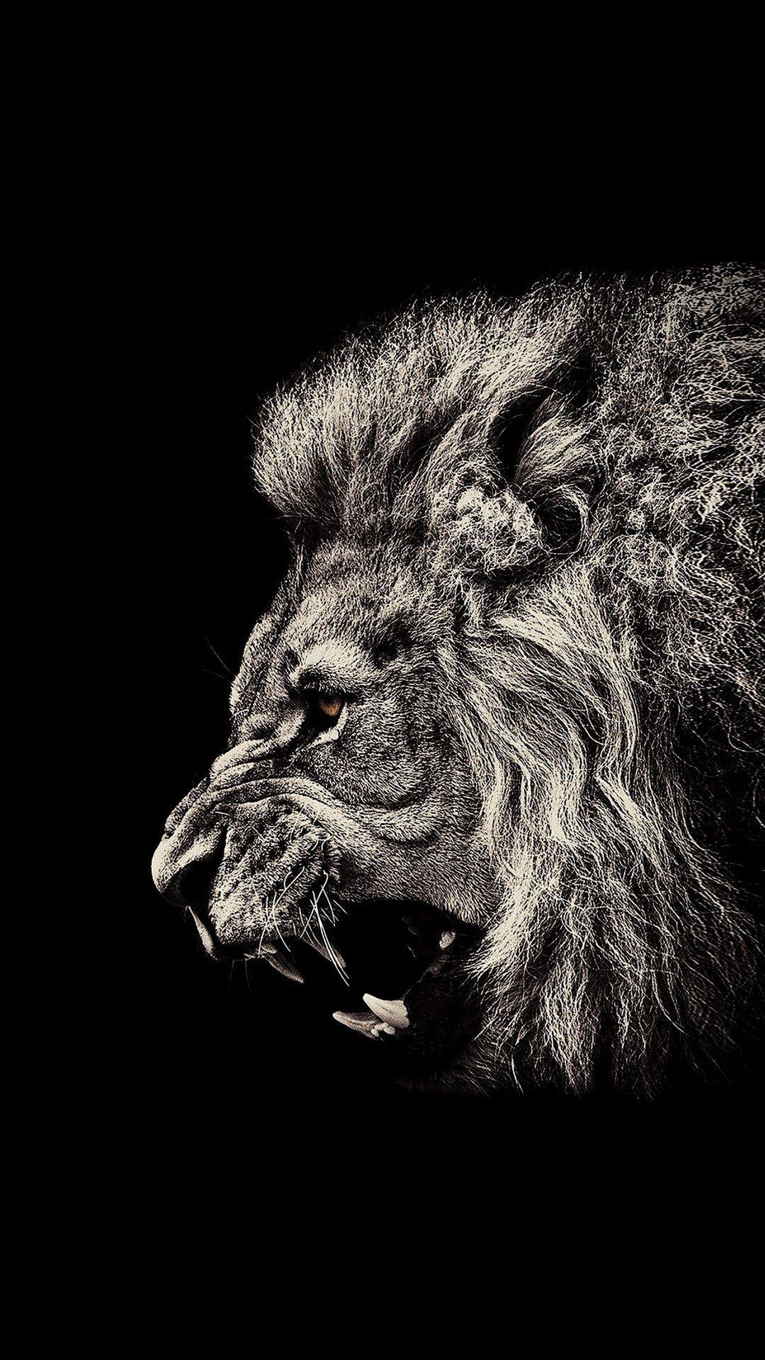 black wallpaper iphone lion