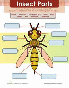 Pin On Insects Body Parts