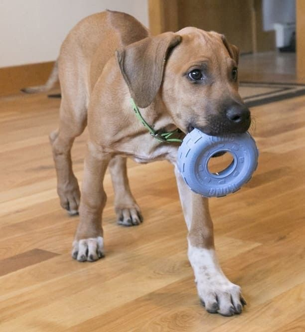 21 Toys For Chewers Snugglers And Every Other Type Of Dog Best