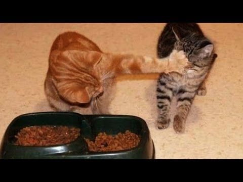 Animals Fighting For Food funny pictures of peop...