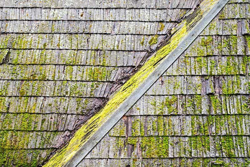 Using Algae Resistant Roof Shingles Roof shingles