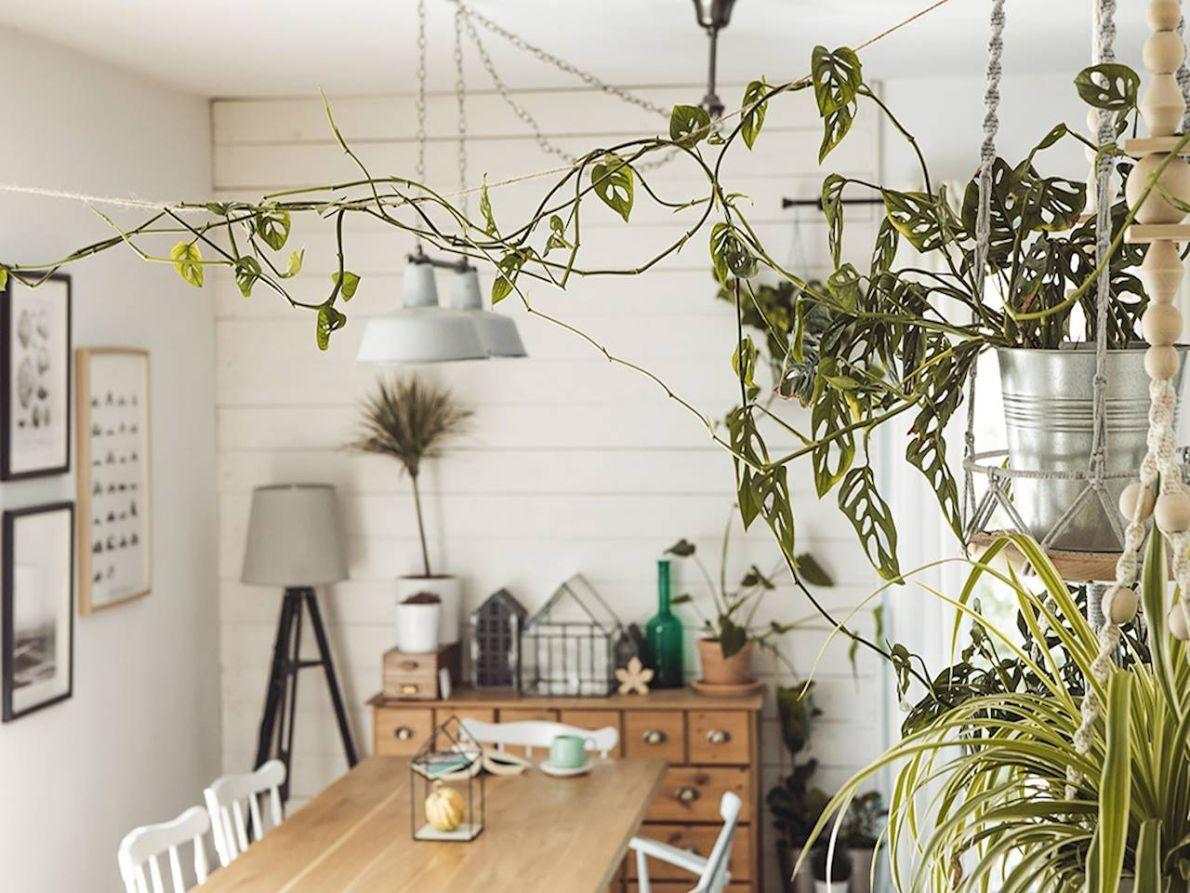 Rosliny Pnace Do Domu Home Decor Home Decor Decals Decor