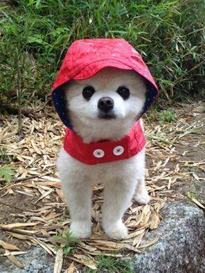 Weatherman said it might rain today