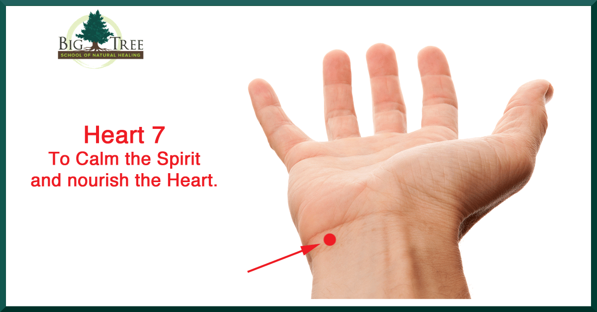 Heart 7 is located on the end of the wrist crease on the ...