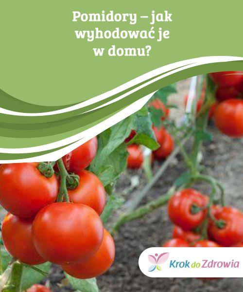 Pomidory Jak Wyhodowac Je W Domu Krok Do Zdrowia Tomato Garden Vegetables