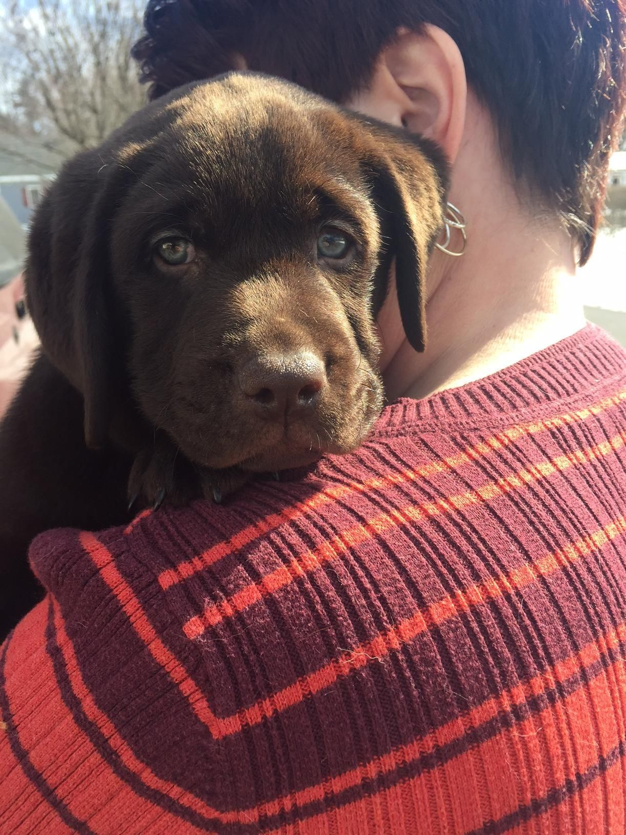 13lbs of Chocolate Love Came Home This Weekend http://ift.tt/2luGYUU