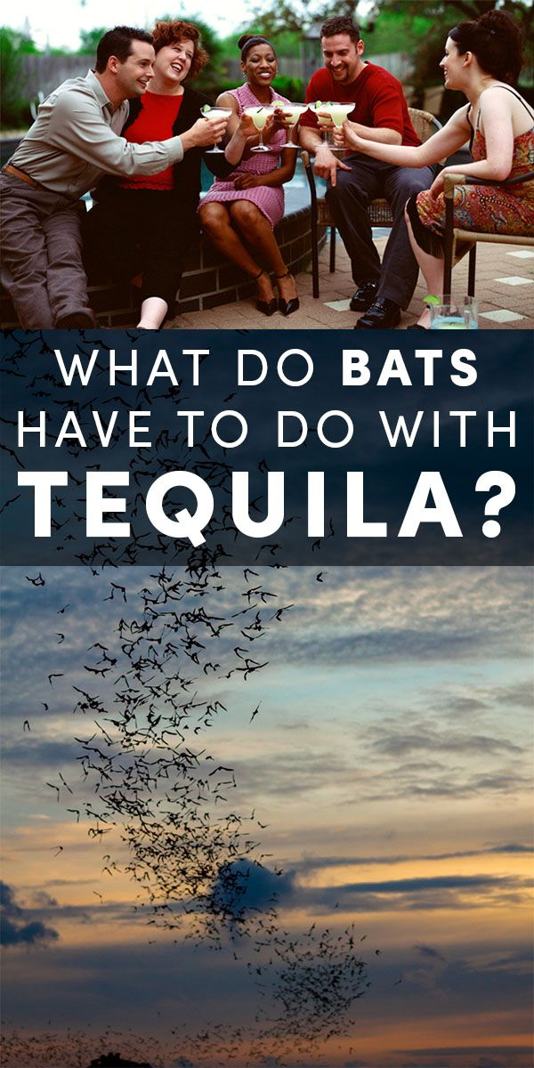 Bats and tequila rely on each other. No bats, no tequila