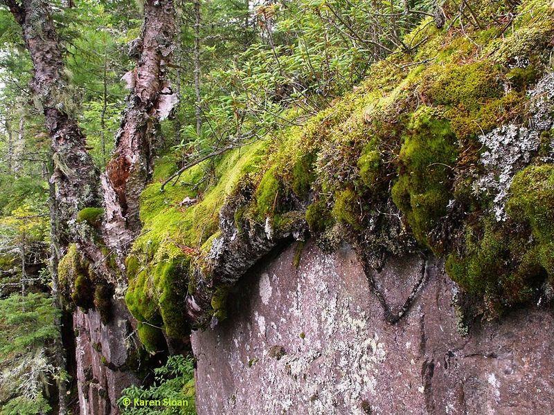 Moss Dripping Off The Rocks On Hike Along Lake Superior Marathon