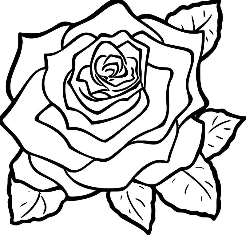 Rose Flower Coloring Page 147 In 2020 Rose Coloring Pages Rose Flower Colors Coloring Pages