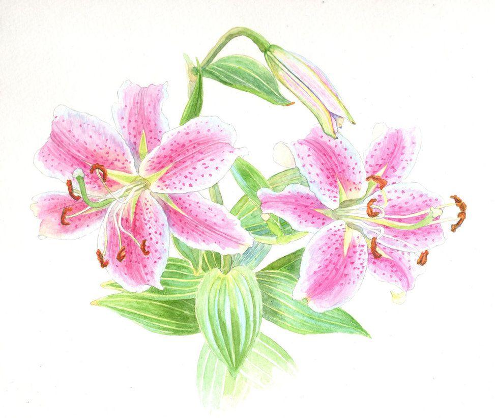 Здоровый образ, открытки нарисованная лилиями