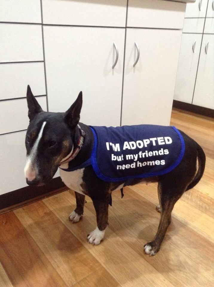I M Adopted But My Friends Need Home Dog Jacket To Promote Dog Rescue Made By Mycraftydog Rescue Dogs Dogs Support Dog
