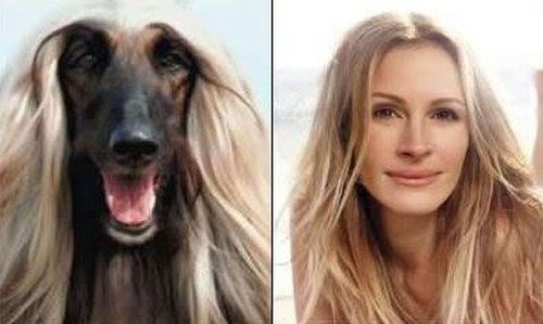 9 MORE Dogs You Could Easily Mistake for Their Lookalike Celeb